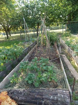 Faire pousser des légumes à l'ombre ?