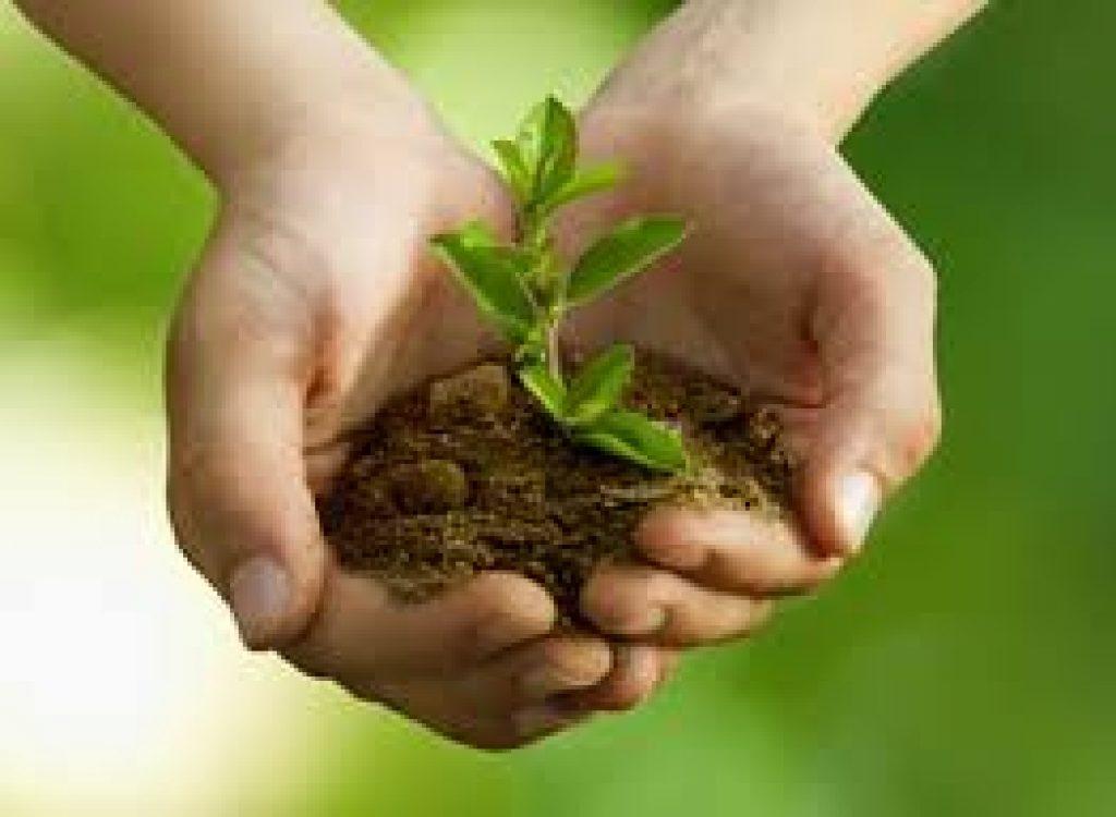 engrais plante