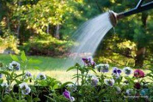 comment arrose son jardin