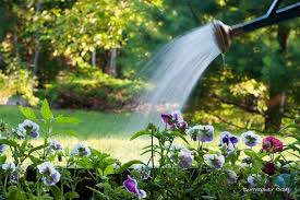 Quand arroser votre jardin ?