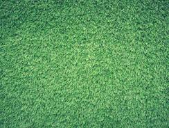 Comment entretenir sa pelouse ?